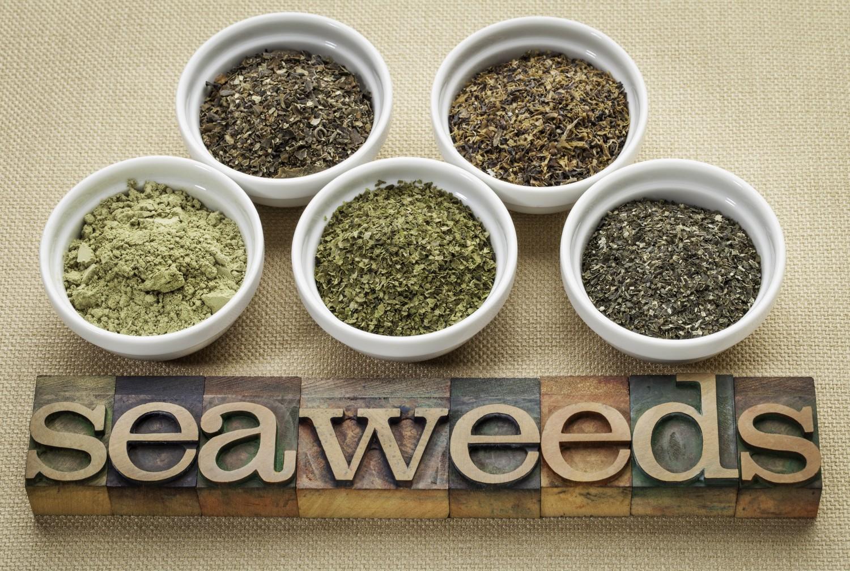 BM_seaweeds - diet supplements_60107416