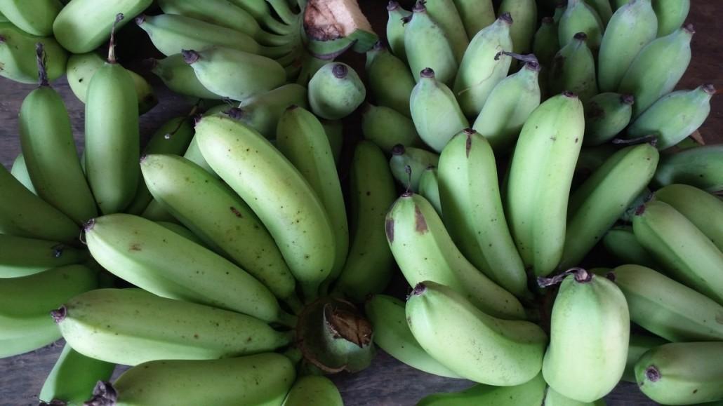 BM_Green banana nature_95159920