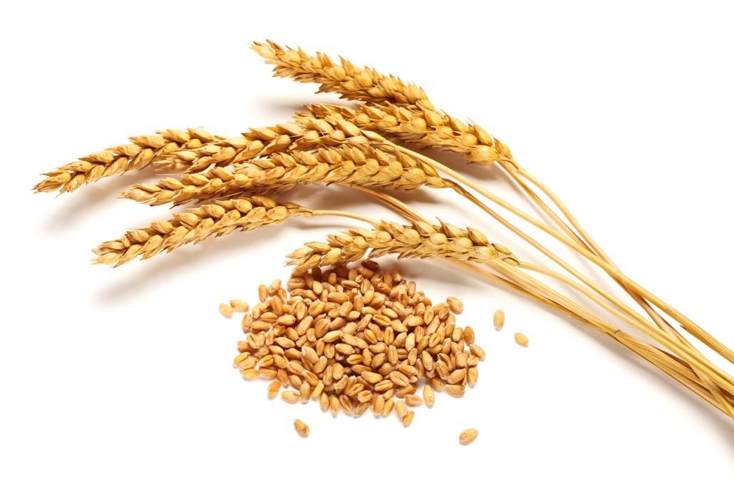 BM_Wheat ears and seed_68591973