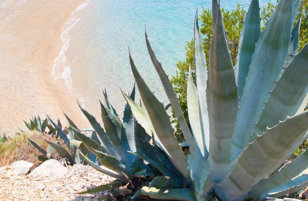 bm_coastline-with-exotic-vegetation_94062370