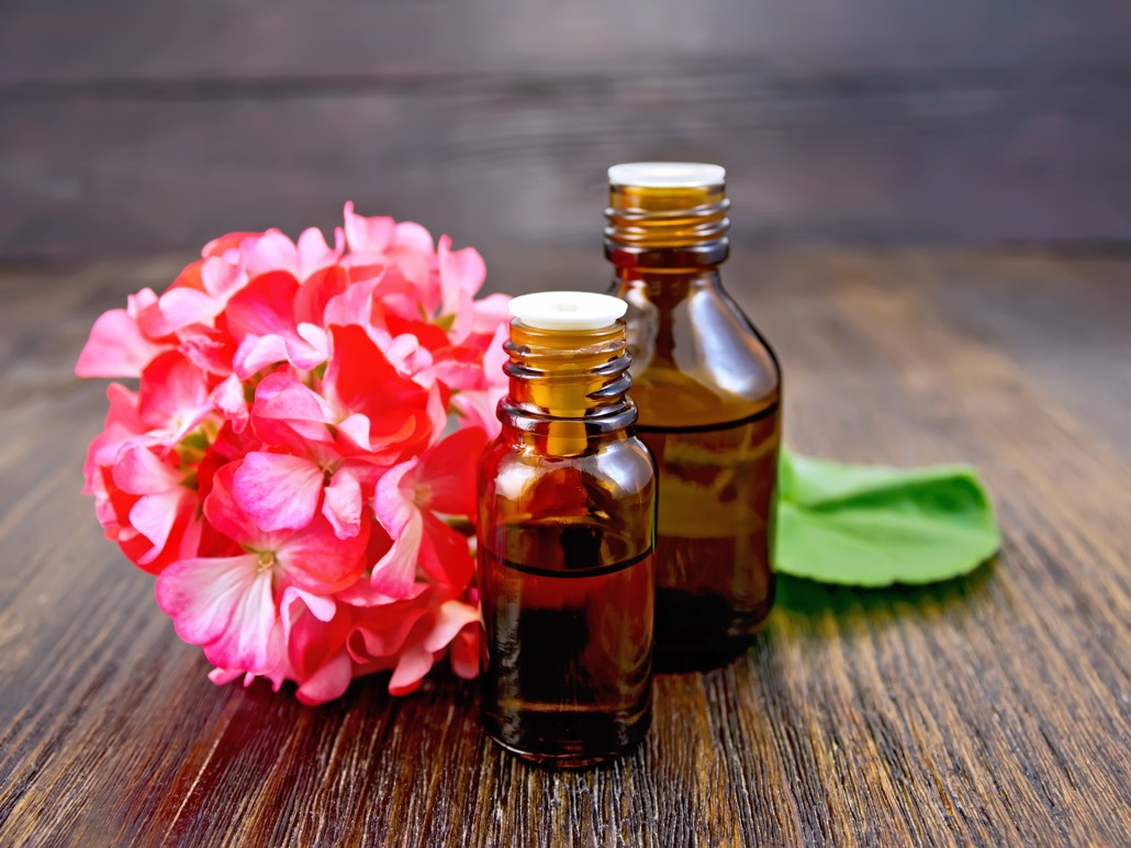 BM_Oil with pink geraniums on board_97701048