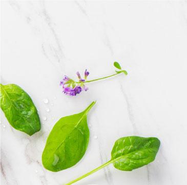 cream_spinach